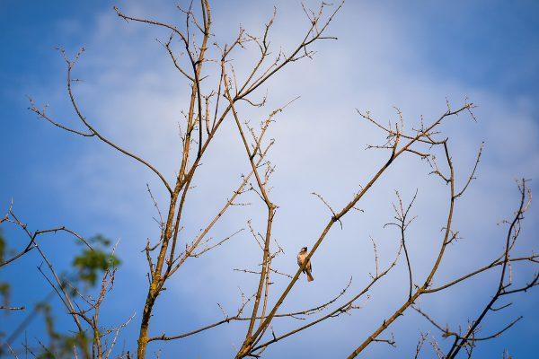 Ptičica na grani