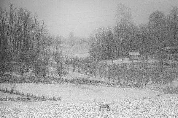 Konj na livadi zimi